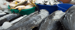 Cornish Fresh Fish Producers